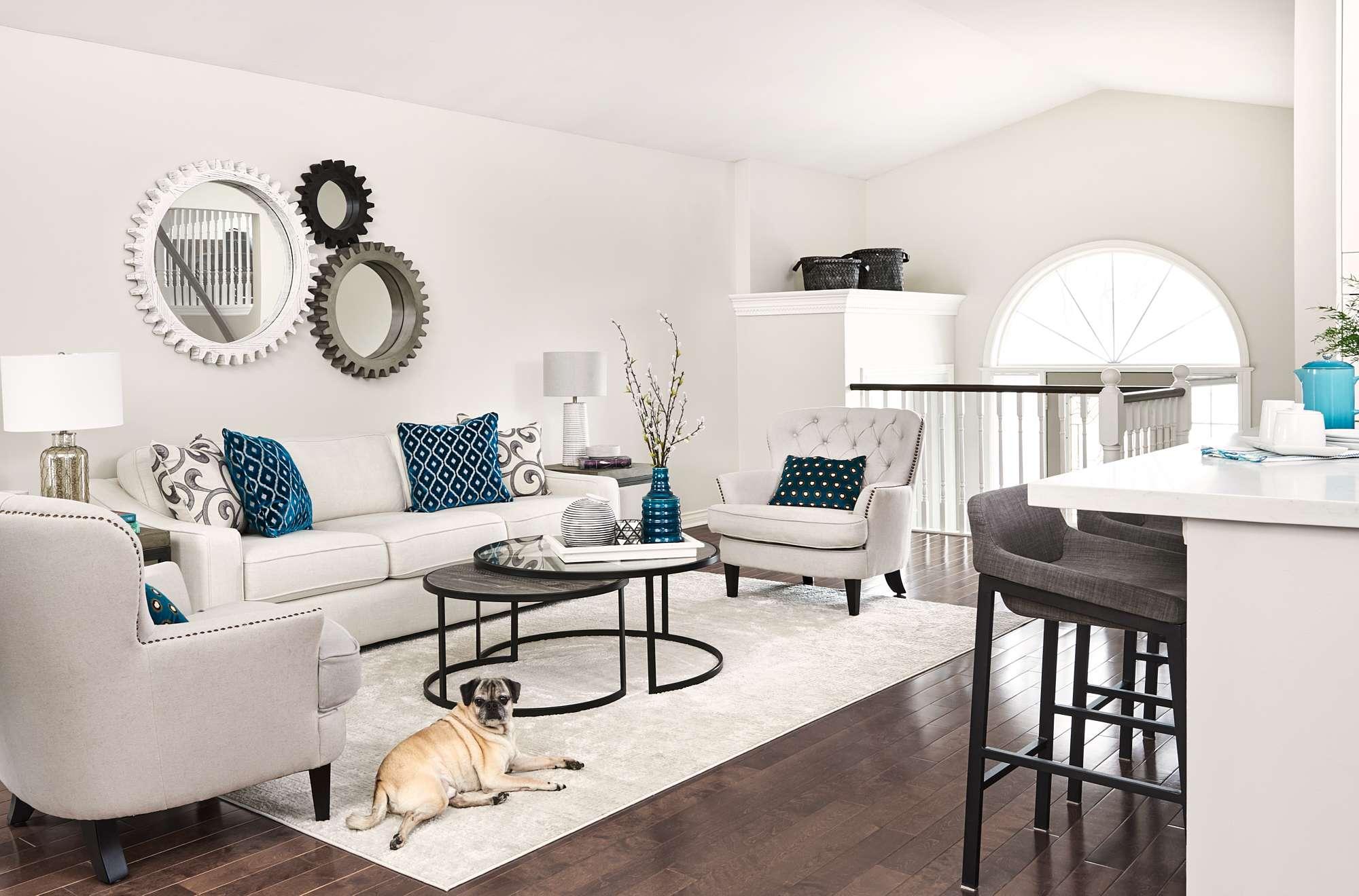 Pet friendly living room design performance fabrics light and bright